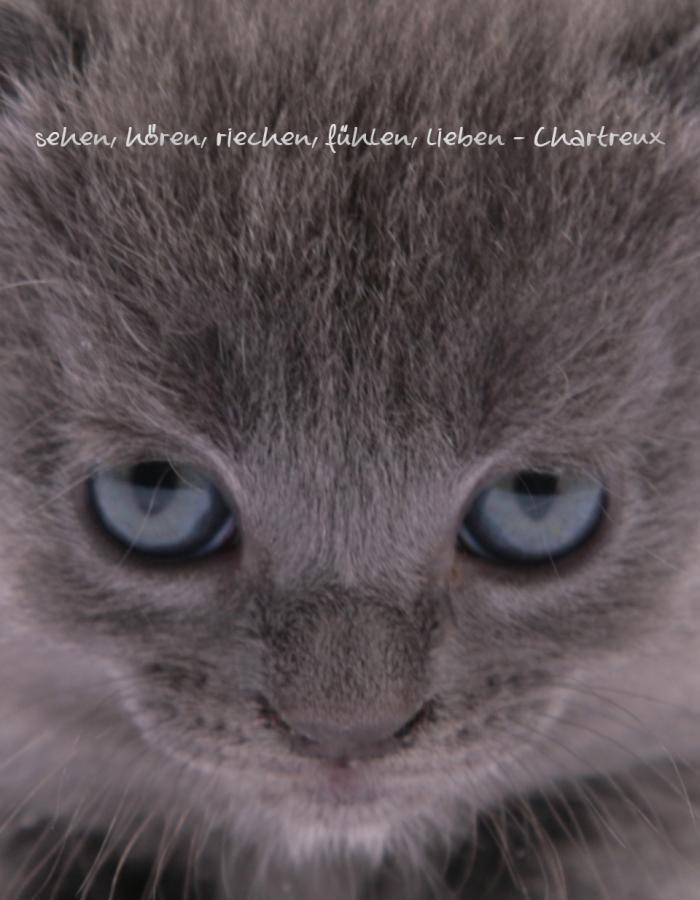 Die Chartreux