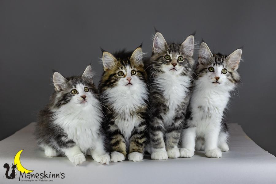 Kleo, Kira, Kimba & Keldan