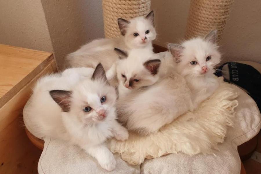Kitten 0