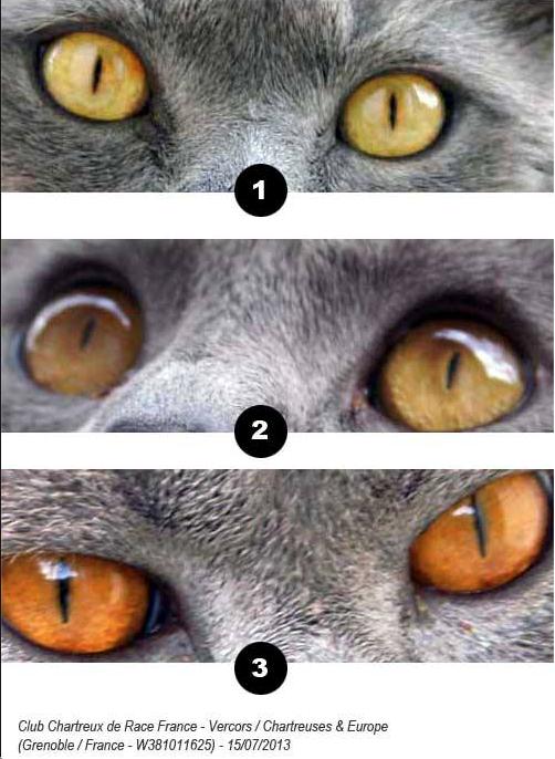 Augen3